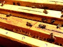 Textura do hexágono do fundo, favo de mel da cera Imagem de Stock