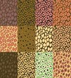 Textura do leopardo do vetor Imagem de Stock