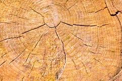 Textura do log visto de madeira redondo na seção do natural com as quebras e o marrom amarelo textured O fundo fotos de stock