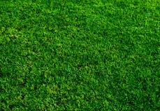 Textura do macro da grama verde Foto de Stock Royalty Free
