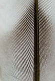 Textura do macro da pena Fotografia de Stock