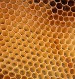 Textura do mel sem mel imagem de stock royalty free