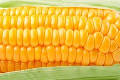 Textura do milho do legume fresco imagens de stock