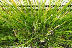 Textura do mini tiro de bambu Textura da natureza Foto de Stock Royalty Free