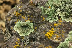A textura do musgo na pedra velha Imagens de Stock Royalty Free