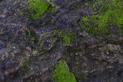 a textura do musgo verde cresce na fundo-imagem da superfície da rocha foto de stock royalty free
