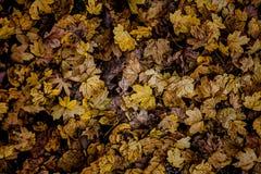Textura do outono Fotografia de Stock Royalty Free