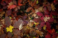 Textura do outono Imagens de Stock Royalty Free