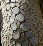 Textura do pé da tartaruga Imagens de Stock