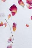 Textura do papel feito à mão com pétalas da flor Imagens de Stock