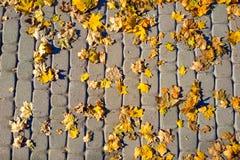 Textura do pavimento Pavimento de pedra do granito velho no parque Vista superior Fundo cobblestoned do pavimento do granito com  imagem de stock royalty free