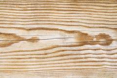 Textura do pinheiro Foto de Stock Royalty Free