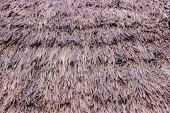 Textura do pinho Imagem de Stock Royalty Free