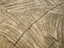 textura do processamento de madeira Imagem de Stock Royalty Free