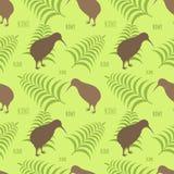 Textura do quivi e do fern Foto de Stock Royalty Free