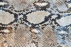 Textura do teste padrão da pele de serpente da boa imagem de stock royalty free