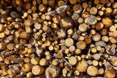 Textura do teste padrão do wook do fogo da lenha Fotografia de Stock