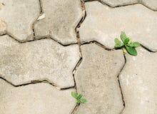 Textura do tijolo da caminhada foto de stock royalty free