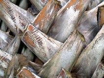 A textura do tronco da palmeira imagens de stock