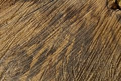 Textura do tronco de árvore Fotos de Stock