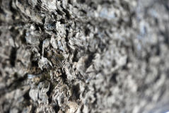 Textura do tronco de árvore Fotografia de Stock