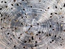 Textura do tronco de árvore fora Fotografia de Stock