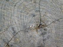 Textura do tronco de árvore fora Imagens de Stock