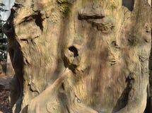 Textura do tronco de árvore, textura da casca de árvore Imagem de Stock Royalty Free