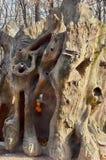 Textura do tronco de árvore, textura da casca de árvore Fotos de Stock Royalty Free