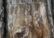 Textura do tronco de árvore velho Imagem de Stock Royalty Free