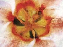 Textura do Tulip fotos de stock