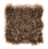 A textura do urso da pele Fotografia de Stock