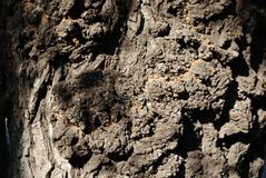 Textura do uso de madeira da casca como o fundo natural imagens de stock royalty free