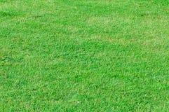 A textura do verde de grama Fotografia de Stock Royalty Free
