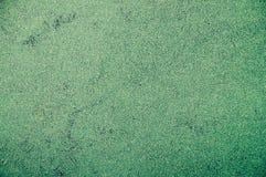 Textura do Wolffia de flutuação Angusta da planta da água imagens de stock