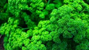 Textura dos bróculos fotografia de stock
