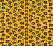 Textura dos girassóis Desing gráfico Fotografia de Stock Royalty Free