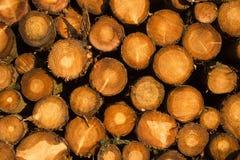 Textura dos logs Fotografia de Stock