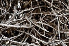 Textura dos ramos de árvore Foto de Stock Royalty Free