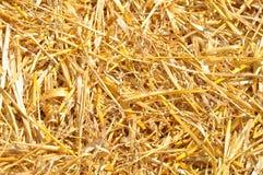 Textura dourada da palha Fotografia de Stock Royalty Free