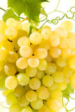 Textura dourada do grupo das uvas no branco Foto de Stock