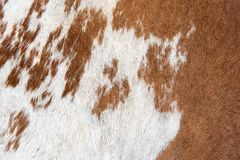 Textura e fundo brancos e marrons da pele da vaca imagem de stock royalty free