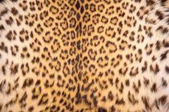 Textura e fundo da pele do leopardo Imagens de Stock