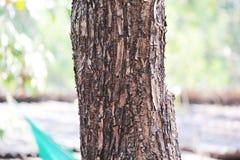 Textura e fundo de madeira close up da textura da casca do tronco de árvore Imagem de Stock Royalty Free