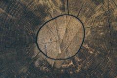 Textura e fundo de madeira Corte o fundo do tronco de árvore no estilo do vintage Fim do tronco de árvore acima Ideia macro da te Foto de Stock