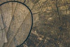 Textura e fundo de madeira Corte o fundo do tronco de árvore no estilo do vintage Fim do tronco de árvore acima Ideia macro da te Imagem de Stock Royalty Free