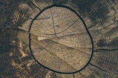 Textura e fundo de madeira Corte o fundo do tronco de árvore no estilo do vintage Fim do tronco de árvore acima Ideia macro da te Fotos de Stock Royalty Free