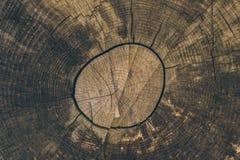 Textura e fundo de madeira Corte o fundo do tronco de árvore no estilo do vintage Fim do tronco de árvore acima Ideia macro da te Imagens de Stock