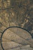 Textura e fundo de madeira Corte o fundo do tronco de árvore no estilo do vintage Fim do tronco de árvore acima Ideia macro da te Fotografia de Stock