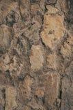 Textura e fundo velhos da parede Fundo da parede para o projeto gráfico Imagens de Stock